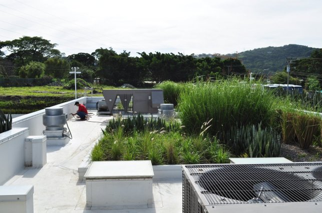 Techo-Verde-Green-Roof-McDonalds-14